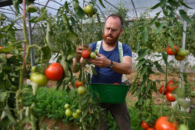 番茄是維他命和其他營養素的最佳來源。(Getty Images)