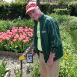 「球莖男人」的花園  光鬱金香就有60種