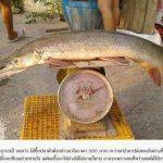泰市場驚見古生物「半鱷半魚」存在地球1億年