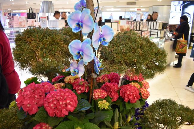 今年梅西花展運用許多繡球花和蘭花。(記者顏嘉瑩/攝影)