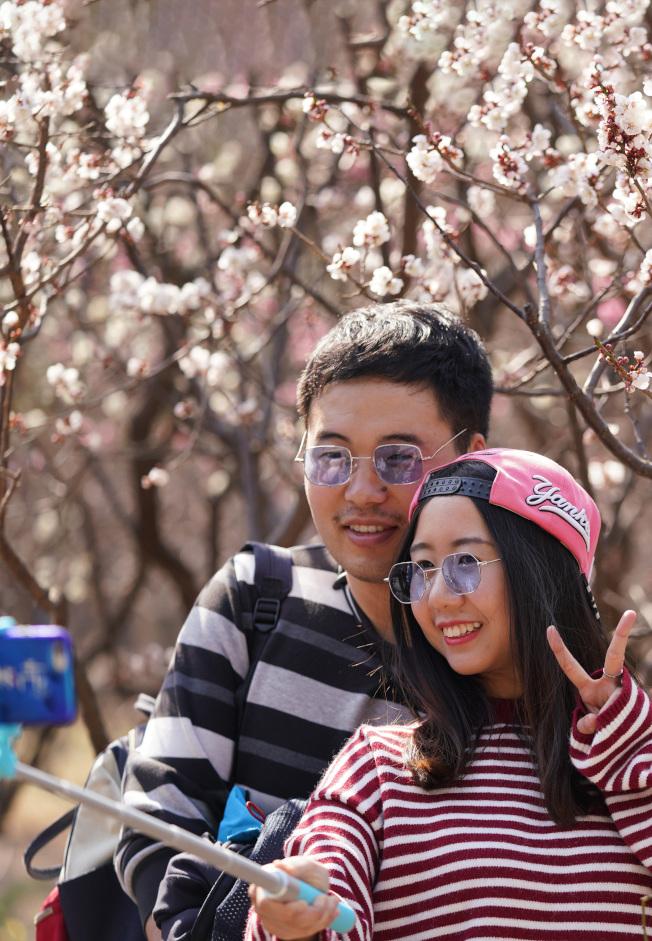 四川西南航空職業學院宣布放六天春假,讓同學走出校外去賞花、去談戀愛。圖北京植物園內賞花拍照的情侶。(中新社)
