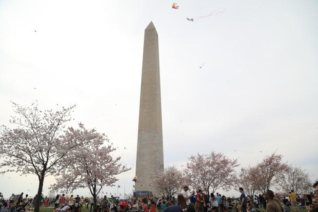華盛頓櫻花季伴隨風箏節開幕,上周末國家廣場乃至潮汐湖畔人山人海。(記者羅曉媛╱攝影)