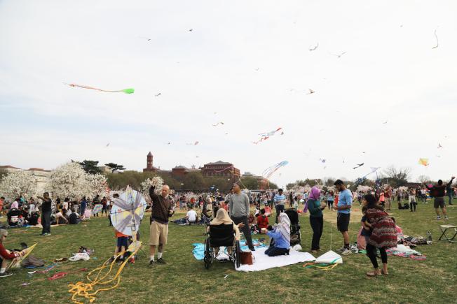 華盛頓櫻花季伴隨風箏節開幕,上周末國家廣場乃至潮汐湖畔人山人海。(記者羅曉媛/攝影)