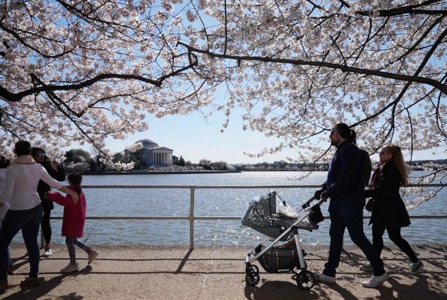 家人帶著小孩,悠閒在華府知名賞櫻景點潮汐湖畔散步(Getty Images)