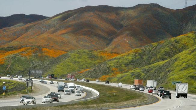 罌粟花就開在公路兩側的山坡上。(Getty Images)