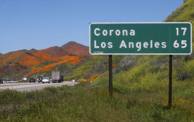 赏罂粟花,离洛杉矶不算太远。(Getty Images)