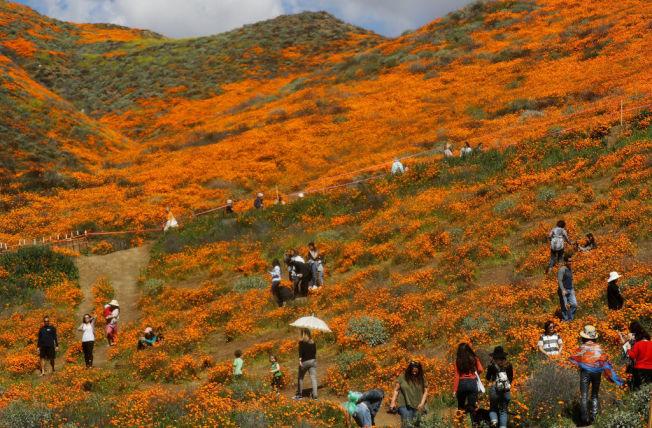 山坡上都是踏春的人。(Getty Images)