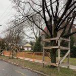 房屋翻修傷害路樹 小心被罰1.5萬或監禁