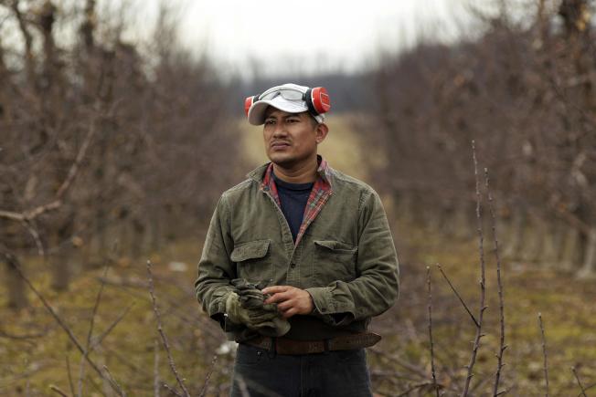 在紐約州蘋果園工作的貝爾川,因無照開車被捕而面臨遣返回墨西哥。(美聯社)