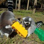 五月岬郡動物園 榮膺新州最佳