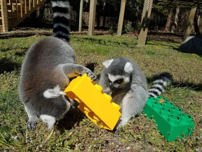 五月岬郡動物園獲選新州最佳。(取自動物園臉書)
