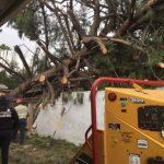 狂風吹倒大樹 砸出大麻屋