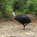 這隻全球最危險鳥 用利刃長爪殺飼主