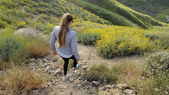 位於艾辛諾湖的Walker峽谷山坡上的橙色罌粟花已逐漸枯萎。(洛杉磯時報)