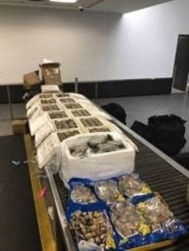 州環境保護廳展示部分中國乘客違法攜帶、遭沒收的蛤蜊、牡蠣以及藤壺等海產品。(州環境保護廳提供)