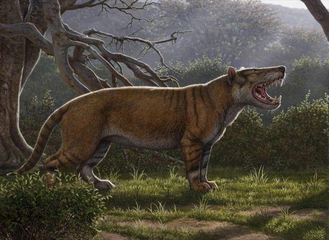 古生物學家挖出名為Simbakubwa kutokaafrika(班圖語,非洲巨獅之意)的新物種下顎、牙齒與部分骨骼。圖╱Gettyimage