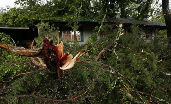 在密西西比州一棵門前大樹遭強風吹斷。美聯社