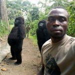 大猩猩擺姿勢和他自拍 網友笑:這是偶像團體嗎