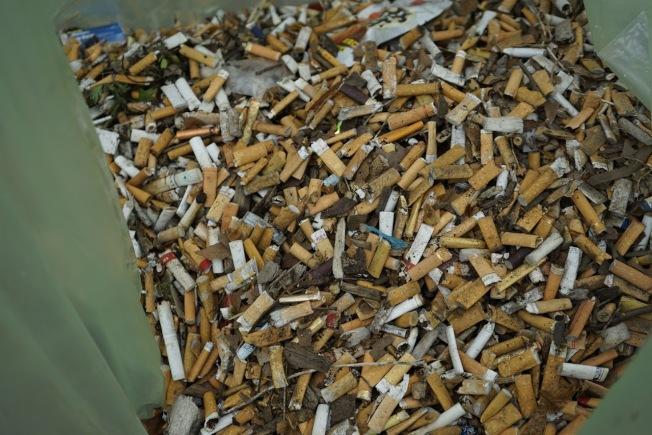 短短五條街清潔出十磅菸頭。(紐約親子互助會提供)