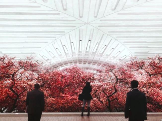 通過Photoshop把地鐵站的照片和此前到各地旅遊拍的風景照進行二次創作,弗里德爾的作品把潮汐湖的櫻花搬到地鐵軌道。(弗里德爾網站)