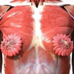 原來女性乳腺長這樣 女網友:內心受創