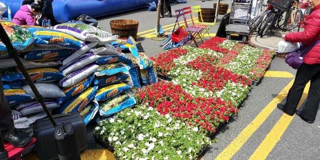 用環保肥料的配置的花卉。(記者張晨/攝影)