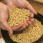 黃豆製品易造成肥肚腩?醫師這麼說