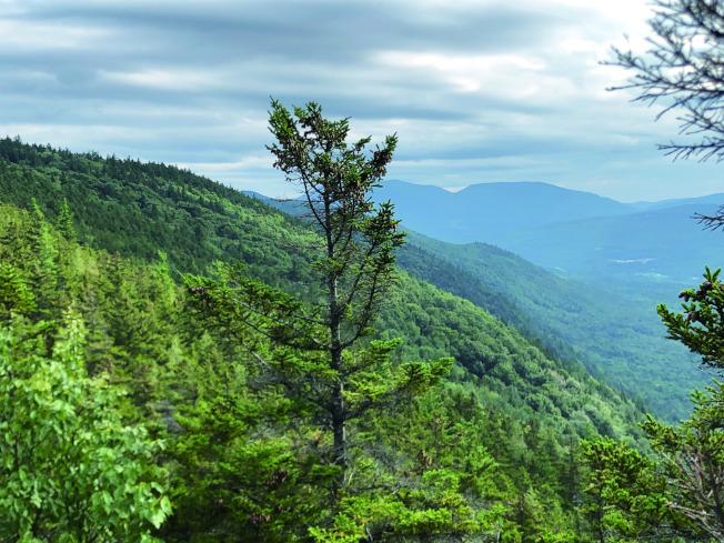 素有「綠山之州」別名的佛州。攝於佛州的Green Mountain National Forest。(盧秋瑩.圖片提供)