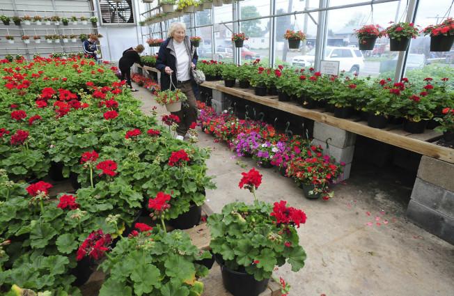 賓州一家花圃準備各種鮮花盆栽應節。(美聯社)