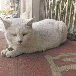 被遺棄的上海老貓 獨守空店鋪1個月