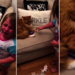 女娃哭訴貓搶玩具 喵星人怒不放手