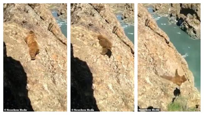 印度北部的查謨-克什米爾邦(Jammu and Kashmir)傳出一段爭議影片,當中顯示一頭棕熊誤闖當地村莊遭人追趕,村民還在棕熊攀爬峭壁逃跑時拿石頭丟牠,結果導致棕熊摔下河谷、最終溺死。(取材自每日郵報)