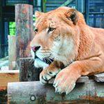 補助縮水…屏科大1500動物求認養