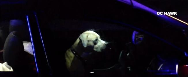 因為一隻寵物犬,一名女子13日凌晨在科洛納(Corona)附近91號公路上,遭遇車追撞死亡。(視頻截圖)