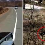 槍口下討飯吃!小偷棕熊叼走俄獵人整箱食物