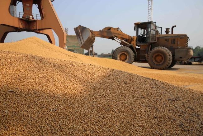 美中貿易戰升溫,愈來愈多農民與漁民抱怨受到影響。圖為中國江蘇南通港進口美國的大豆。(Getty Images)