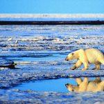 地球熱到不像話!北極海氣溫達攝氏29度