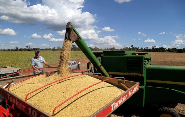 為了找尋美國黃豆替代品,中國轉而投向南美洲懷抱。(路透)