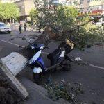 樹斷、牆倒、飛機劇烈顛簸 北京颳強風釀四死