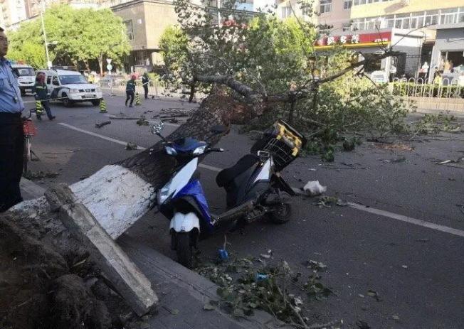 北京19日遭遇強風襲擊,不少路樹甚至因此被吹倒,砸中路過人車。(取材自北京青年報)