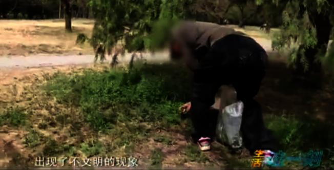 天壇公園裡挖野菜的民眾。(視頻截圖)