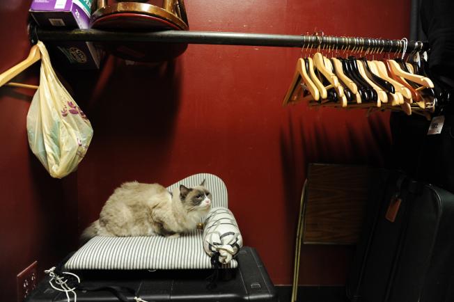 房子有異味也是房屋乏人問津的常見原因。房仲指出,屋內有貓臭味特別惹人嫌。(Getty Images)