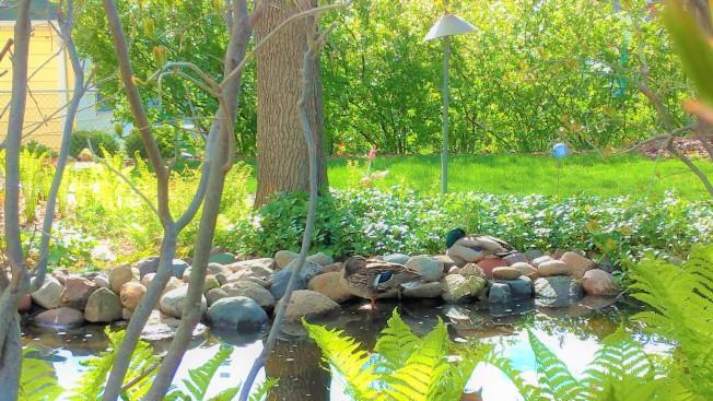 在漫長冬季結束後,明州大地瞬間從灰白變為彩色,為鼓勵大家到戶外走動欣賞充滿活力的大地,即日起到5月29日止,聖保羅公園舉辦春季攝影比賽,主題為「大地新氣象」(New nature),參加者要先加入聖保羅公園(Saint Paul Parks and Recreation)的臉書或Instagram;參賽照片要在聖保羅市內拍攝,然後把作品上傳到臉書,並加註@saintpaulparks;Instagram則加註#mysaintpaulparks。所有參加者都能抽獎獲得游泳入場券。詳情請參閱:https://www.stpaul.gov/news/spring-photo-contest。(圖與文:記者陳曼玲)