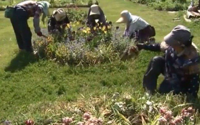 當地花農在今早開始進行拔除球根的作業。photo credit: uhb.jp