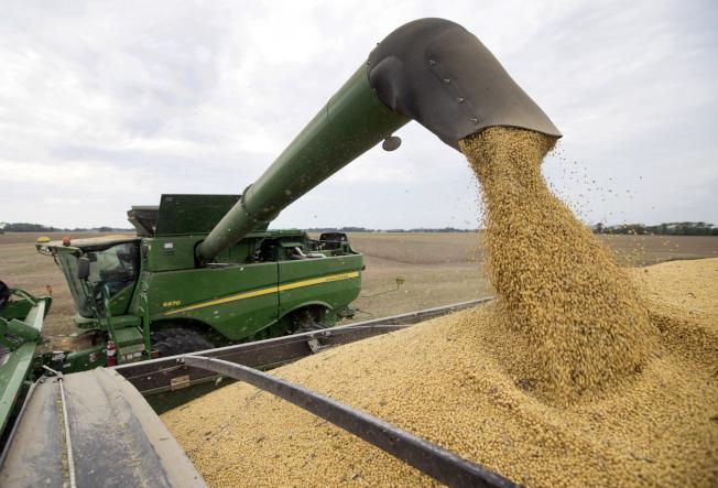 美中貿易戰升級,中國停止進口美國大豆。圖為去年9月美國印第安納州豆農正在採收大豆。(美聯社)