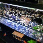 密集恐懼注意!魚缸沒關燈 回頭看水上竟成「屍海」