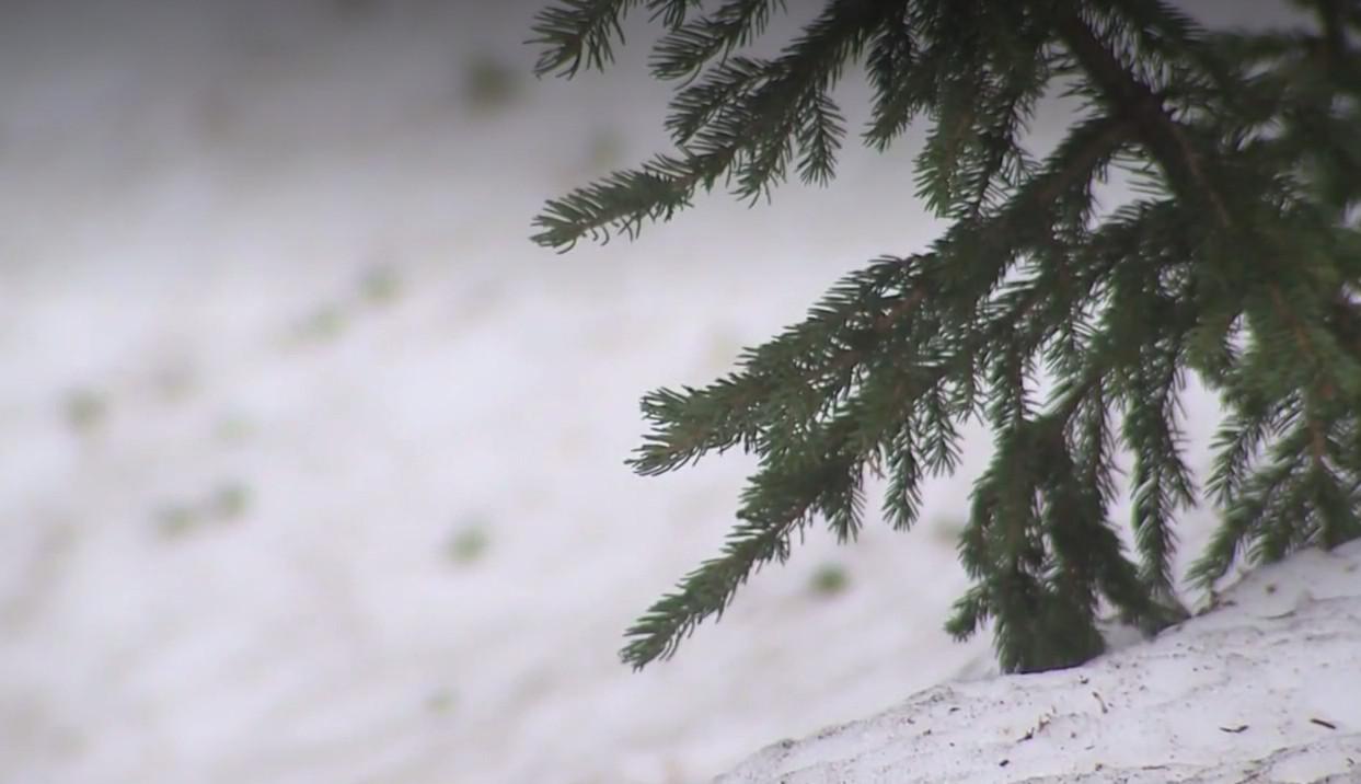 科羅拉多州在夏天開始第一天、即上周末出現近百年來罕見的降雪。圖取自影片截圖