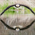 老鷹水面展翼如拱橋 他拍下完美瞬間