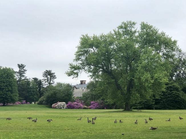老威斯特伯瑞花園內景色優美。(記者朱蕾/攝影)