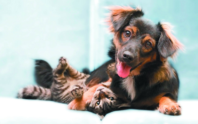 被寵物貓狗抓傷或咬傷,傷口小也不能輕忽。(本報資料照片)